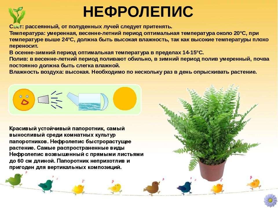 Гипоцирта (23 фото): уход в домашних условиях, гипоцирта голая и другие виды цветка, размножение
