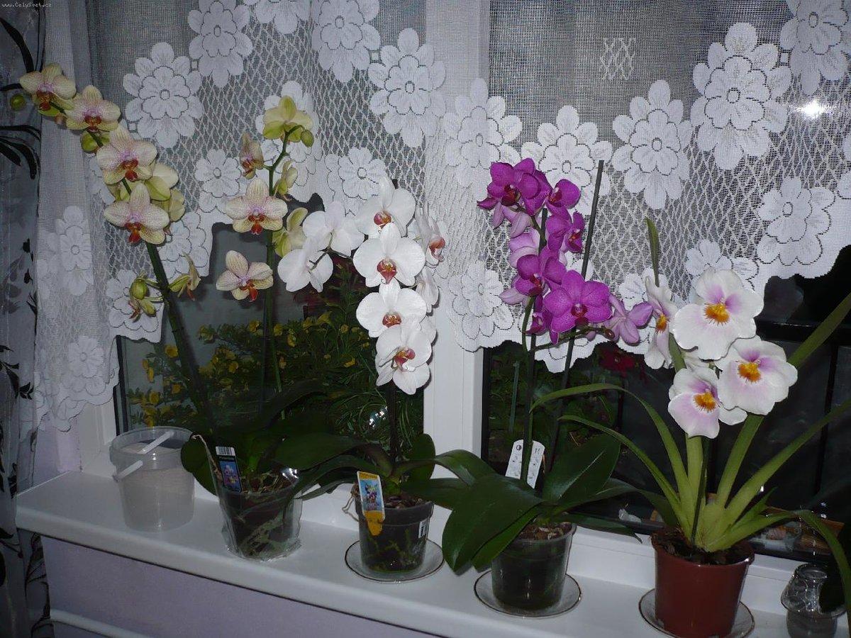 Все тонкости ухода за орхидеями до, во время и после цветения