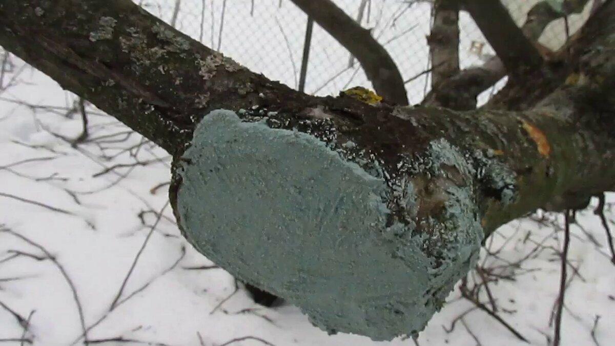 Чем замазать срезы плодовых деревьев. чем замазать срез на яблоне?