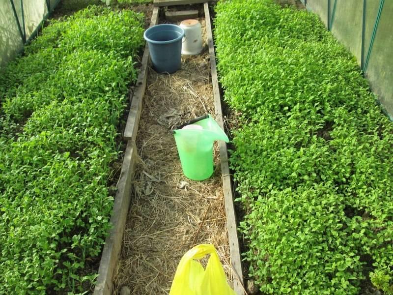 Люпин как сидерат: виды растения и выращивание. преимущества использования