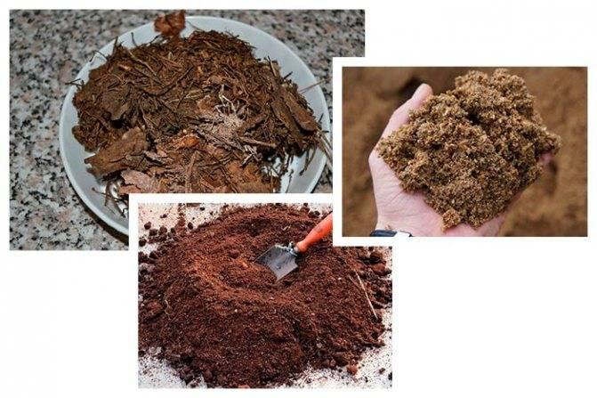 Какая земля нужна бегонии, где ее взять, как приготовить грунт самостоятельно?