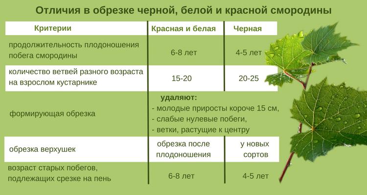 Как и чем удобрять крыжовник, схемы и виды удобрений