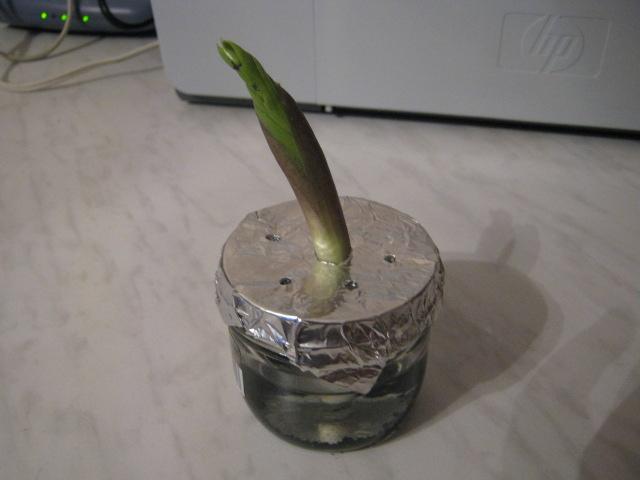 Размножение замиокулькаса в домашних условиях: ветками, черенками, листочками