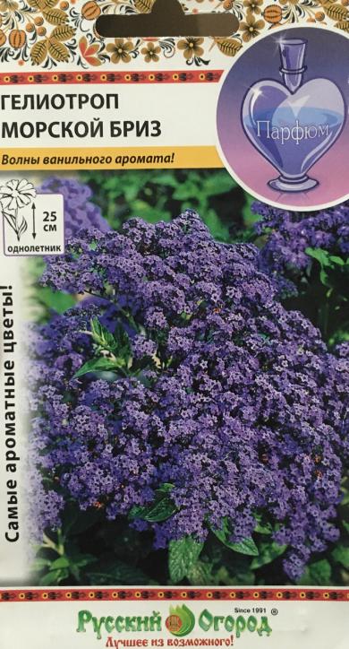 Цветок гелиотроп: фото с описанием, особенности посадки и ухода