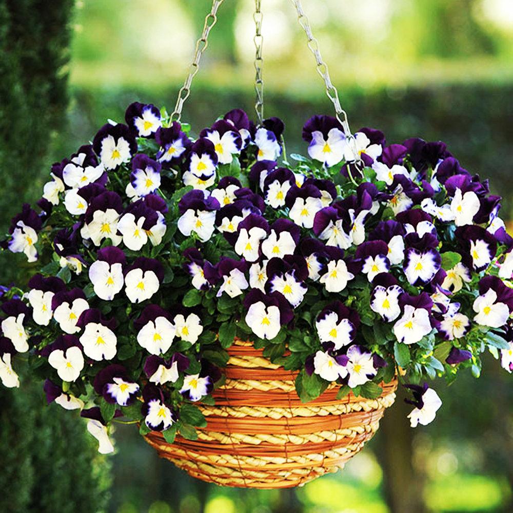 Названия цветов для балкона (63 фото): балконные вьющиеся и ампельные растения на северной стороне