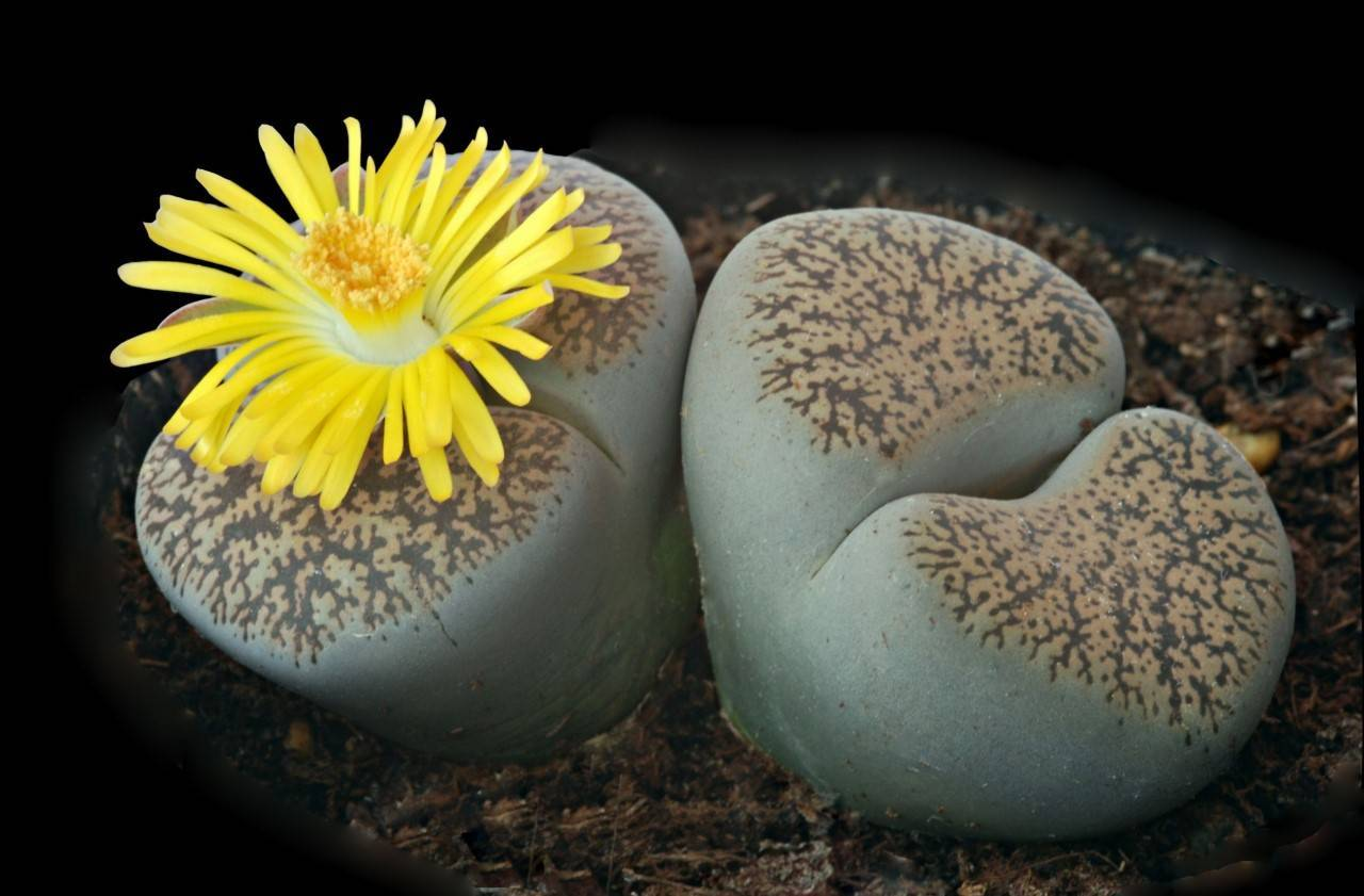 Секреты ухода и размножения комнатных растений - энциклопедия цветов