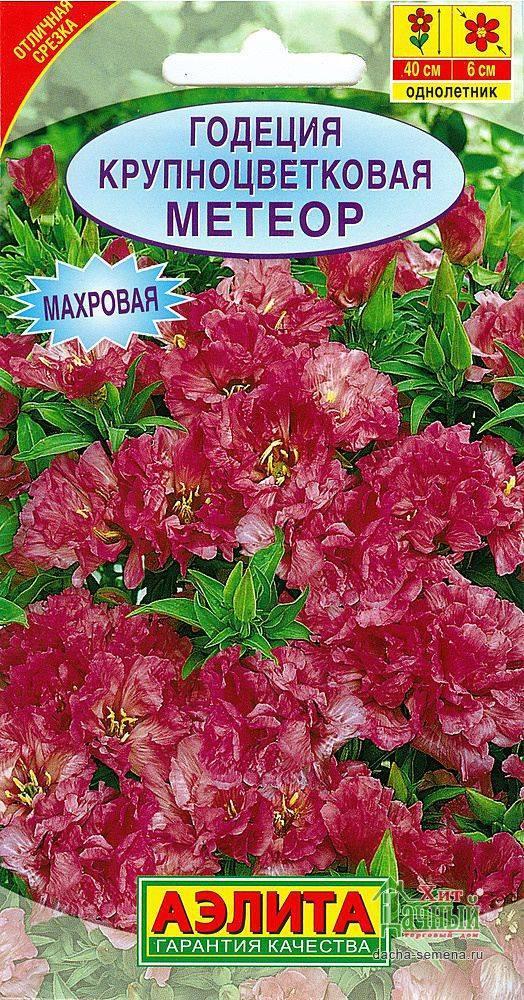 Цветок годеция: посадка и уход, фото, выращивание из семян в открытом грунте