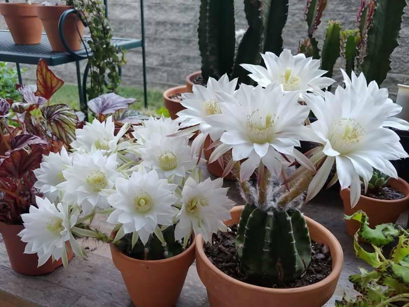Как посадить кактус: примеры в домашних условиях