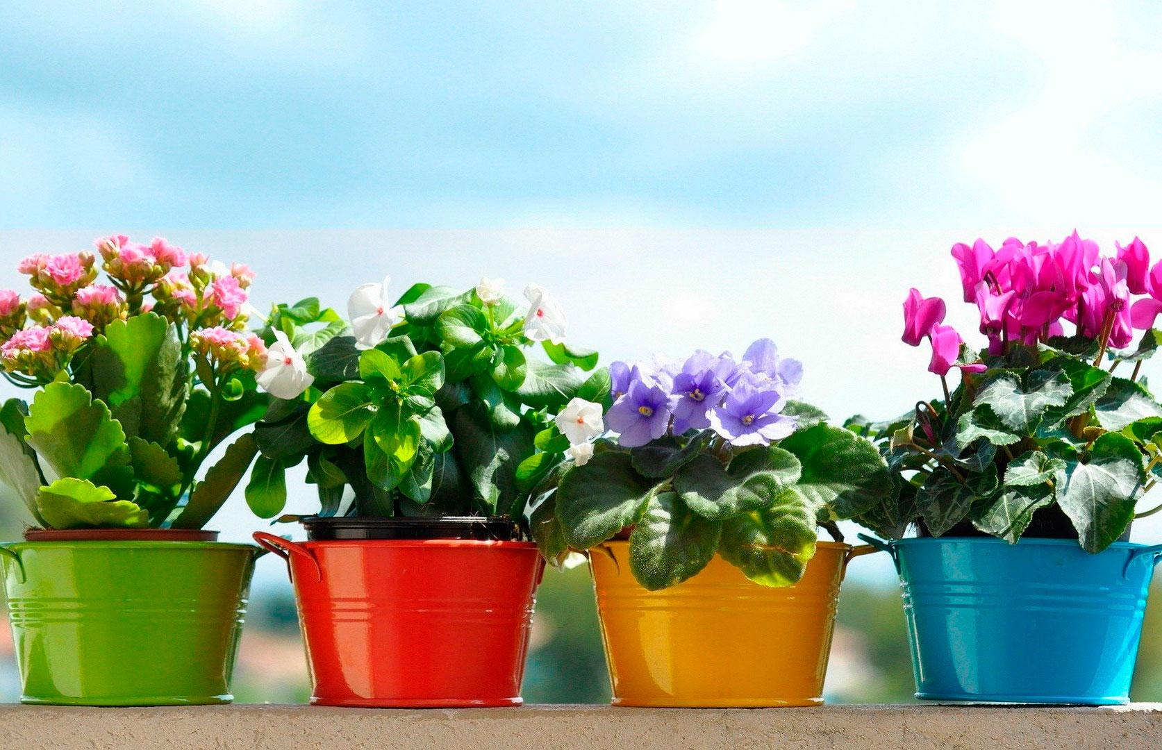 """Комнатный цветок """"невеста"""": как ухаживать после покупки"""