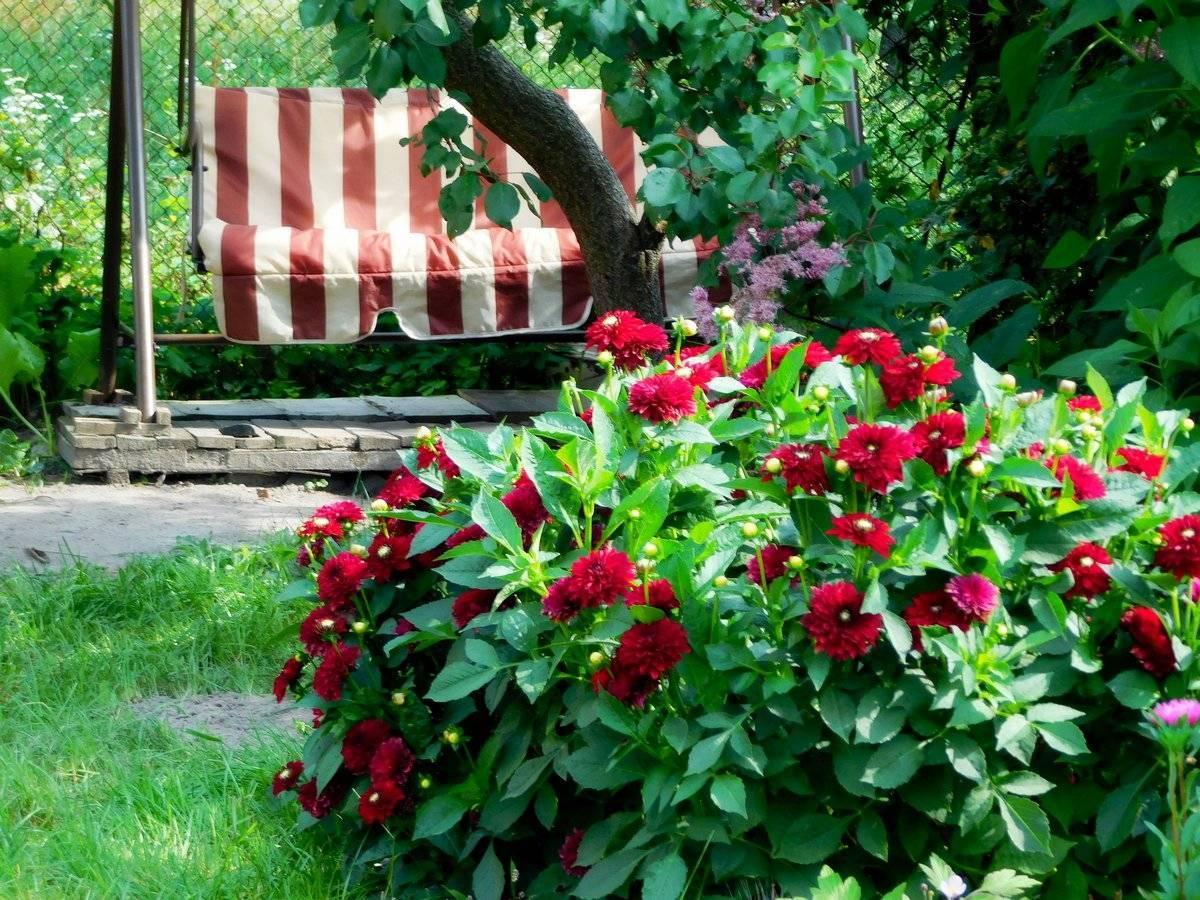 Многолетние цветы для сада и дачи: названия, посадка и уход за цветущими многолетниками