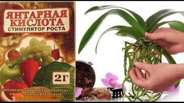 Янтарная кислота для орхидей: как применять в таблетках