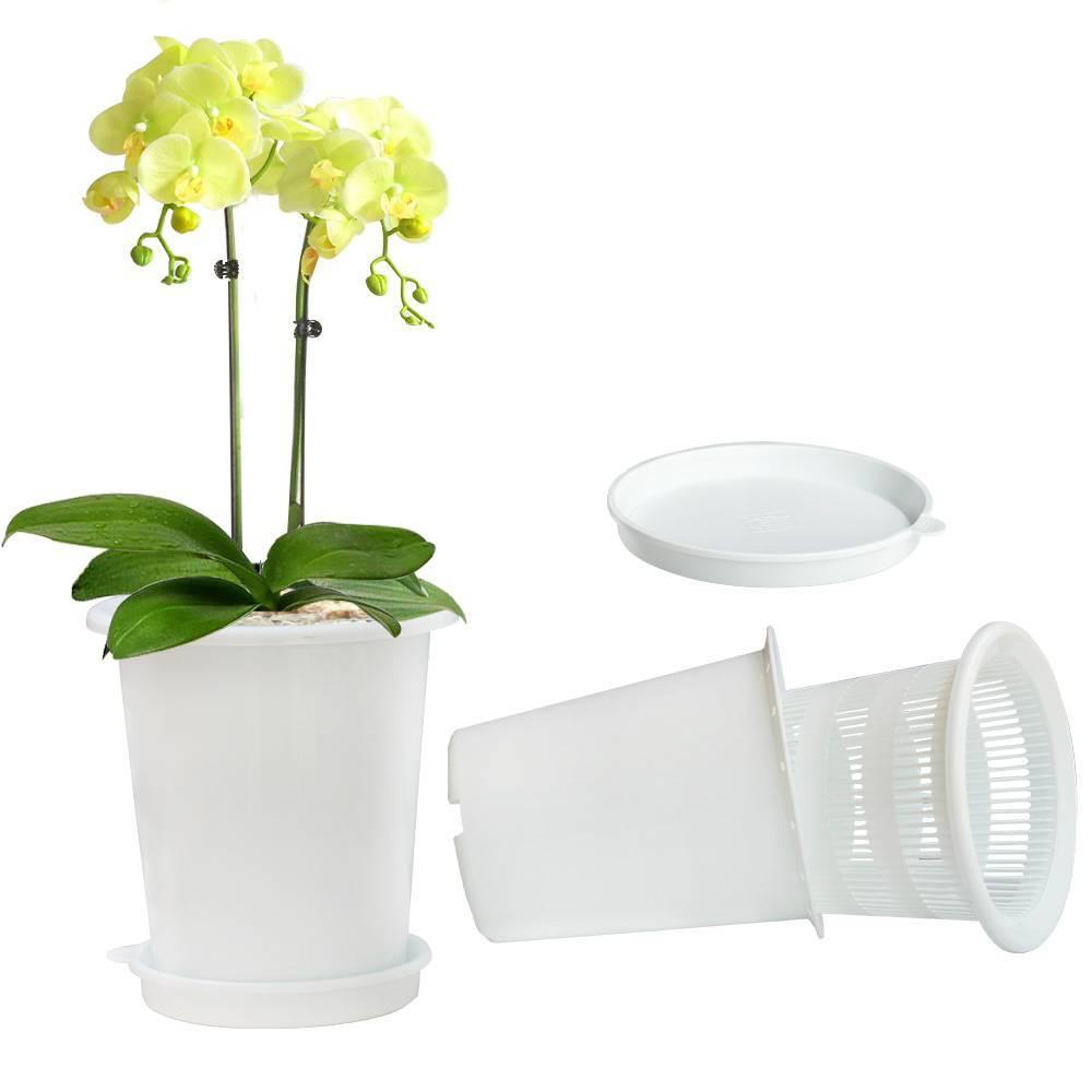 Рассказываем, в какой горшок пересадить орхидею