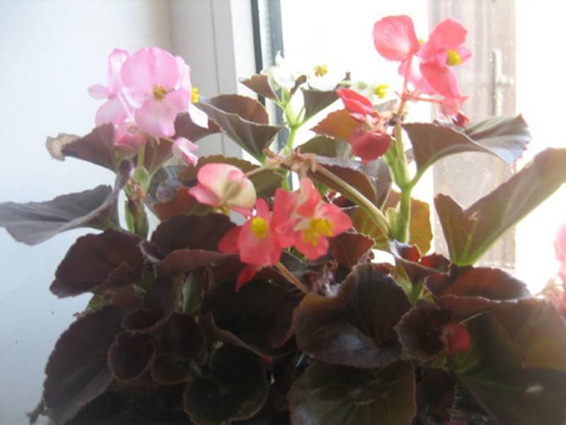 Цветущие комнатные растения фото и названия уход за ними