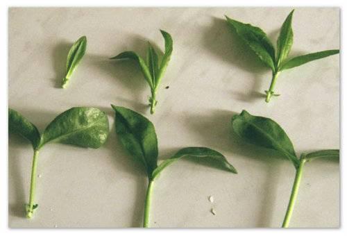Размножение флоксов: как и когда рассаживать? особенности деления куста осенью. правила посадки семенами и дальнейший уход