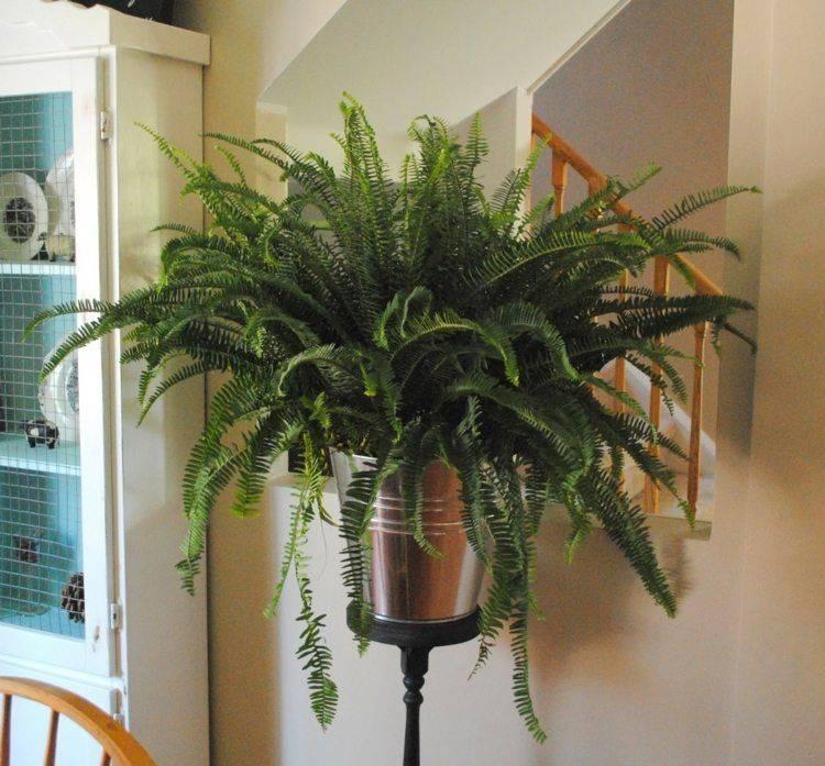 Комнатные растения в интерьере квартиры и дома