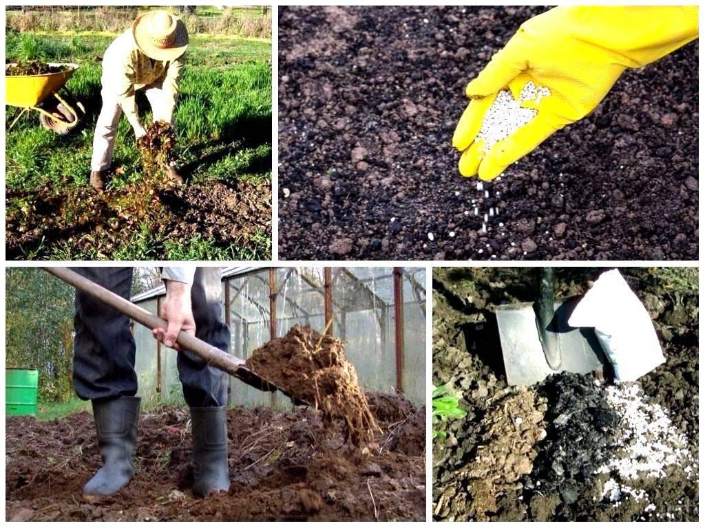 Как правильно сажать розы в открытый грунт: когда и как посадить весной