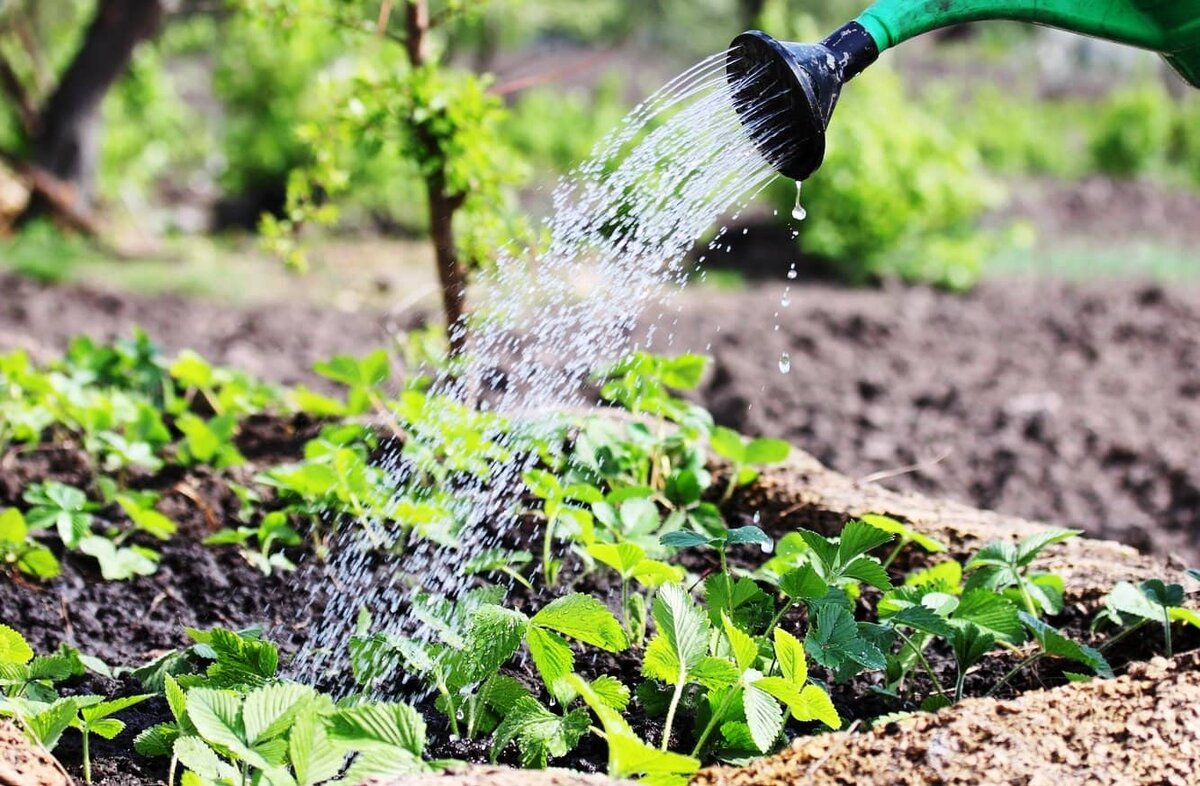 6 проверенных способов размножения крыжовника осенью, весной и летом