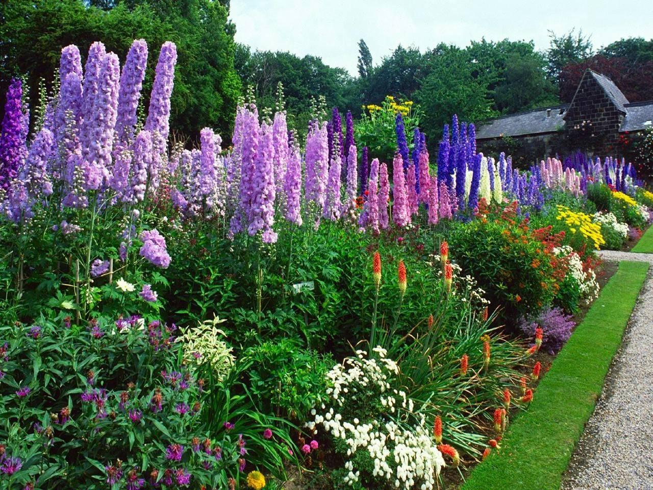 Наперстянка — изысканный перст вашего сада