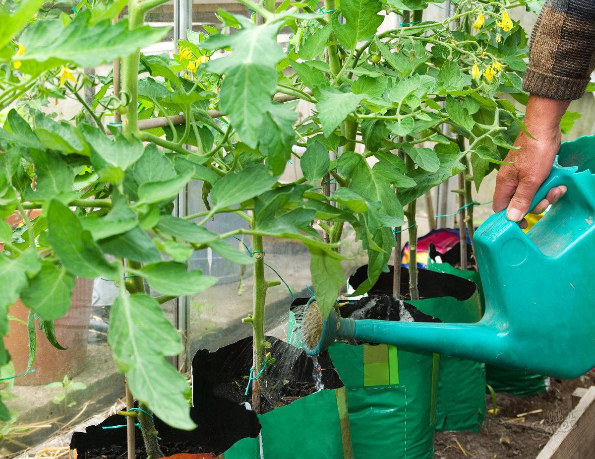 Цветение дюшенеи индийской дома: подкормка, опрыскивание и выращивание