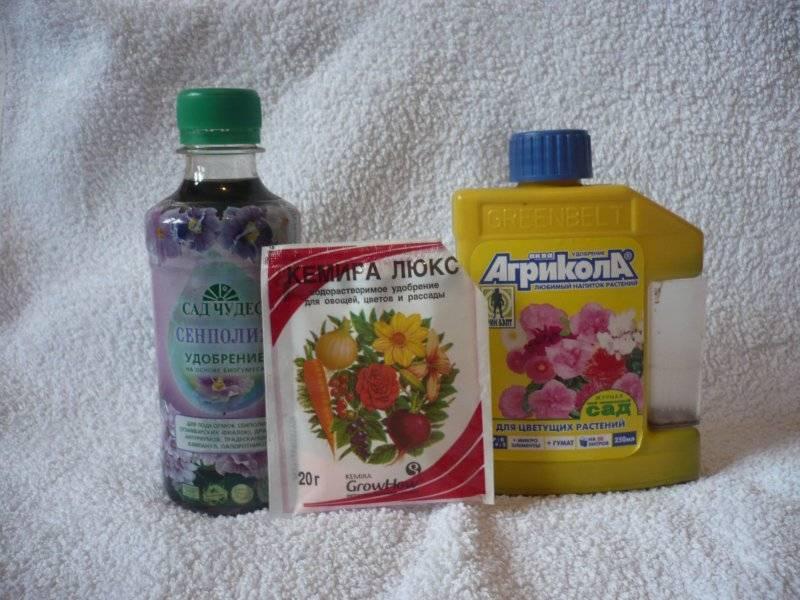 Когда и чем подкормить фиалки для обильного цветения?