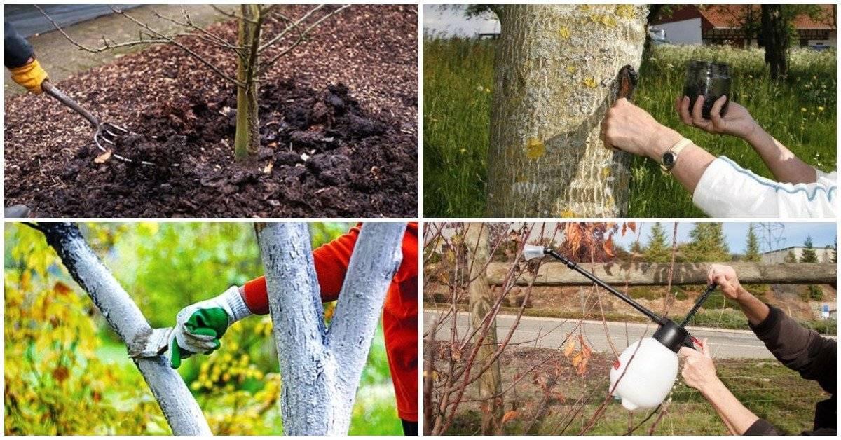 Опрыскивание плодовых деревьев весной до и после цветения - pocvetam.ru