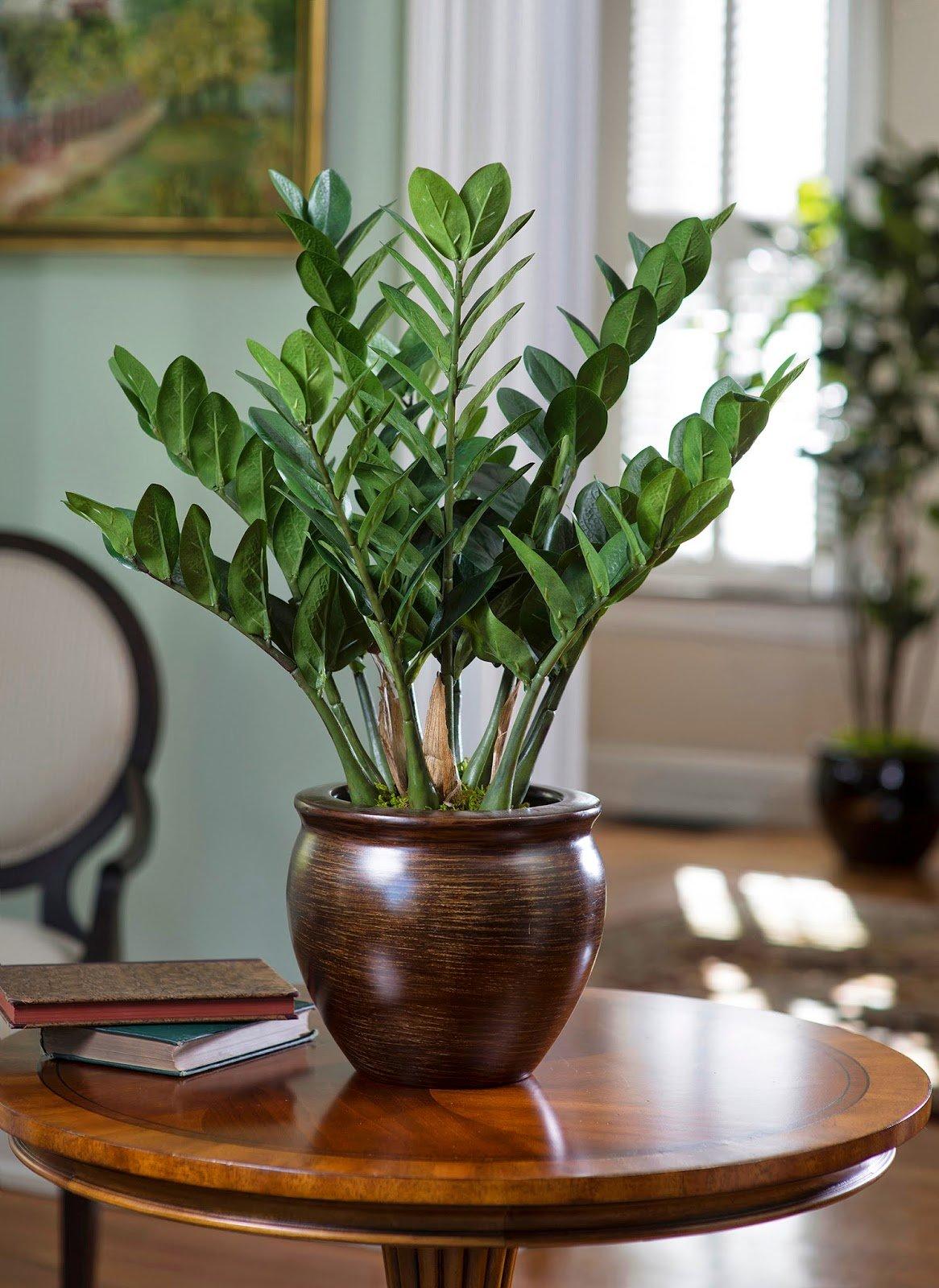 Тенелюбивые комнатные растения. неприхотливые тенелюбивые комнатные растения