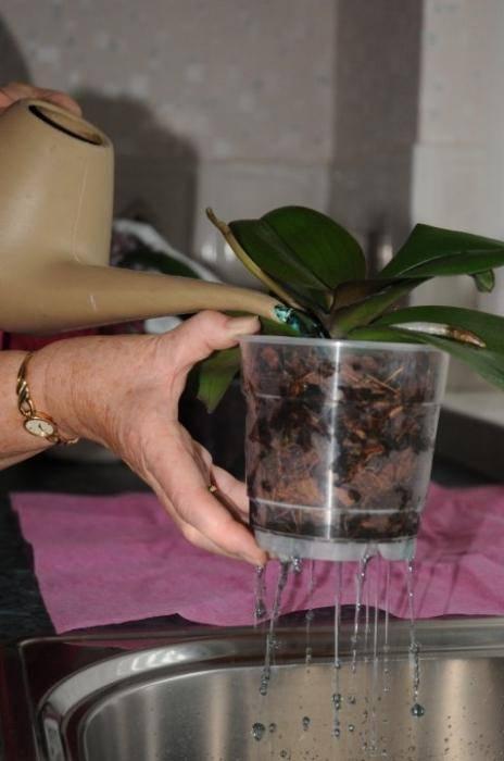 Как заставить цвести орхидею в домашних условиях – шпаргалка для цветовода