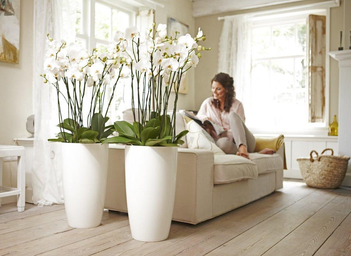 Народные приметы и суеверия, связанные с орхидеей. можно ли держать ее дома?