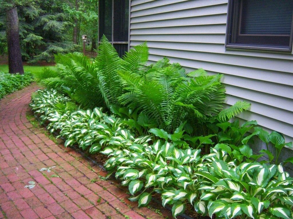 Папоротник садовый: посадка и уход в открытом грунте, применение в ландшафтном дизайне