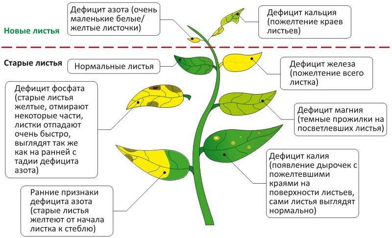 Почему скручиваются листья у комнатных растений