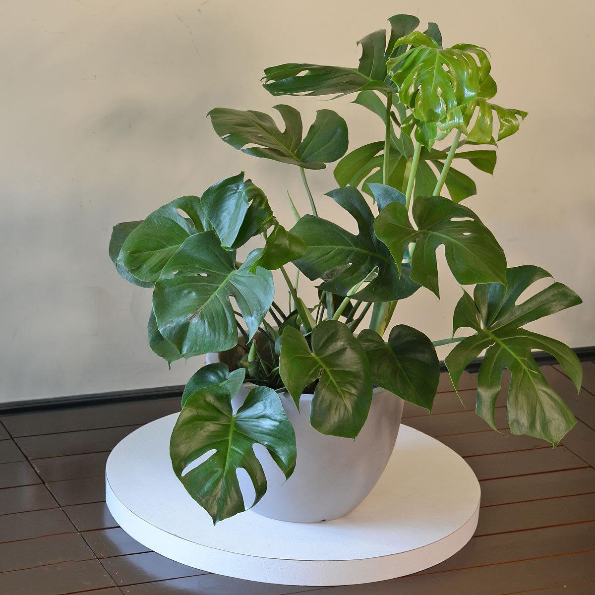 Польза и вред комнатных растений и их влияние на здоровье человека