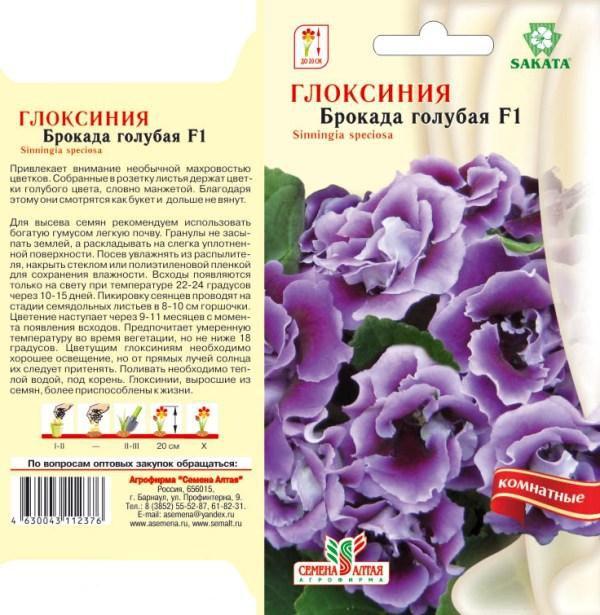 Виды и описание глоксинии брокада. посадка, уход и размножение цветка