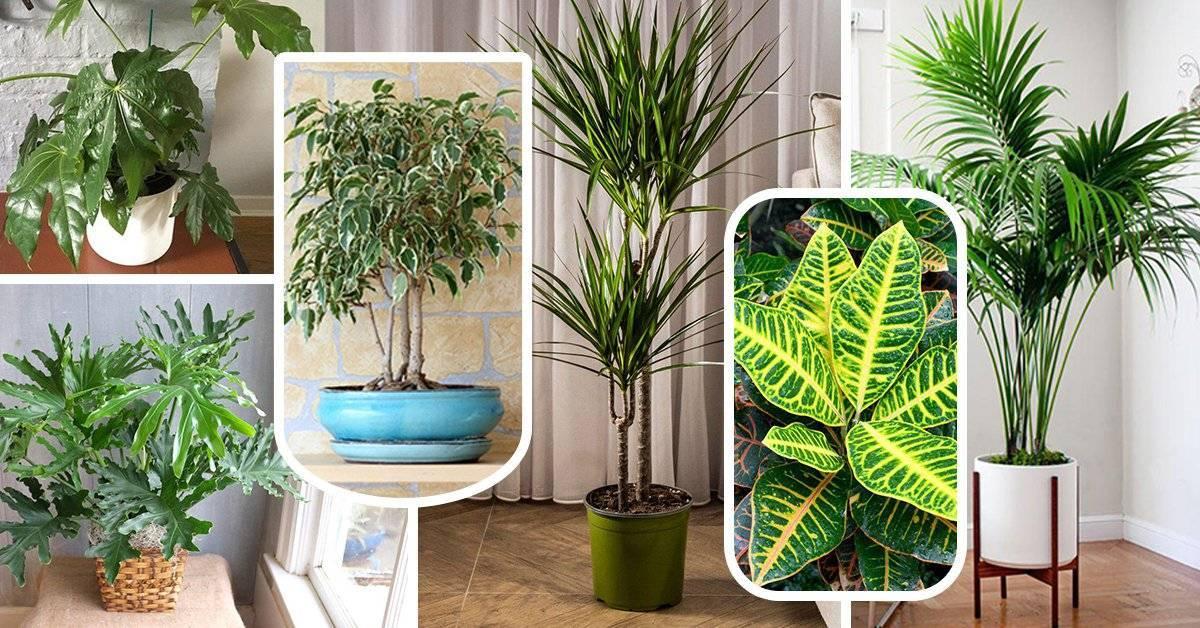 100+ лучших идей | комнатные растения в интерьере (80 фото)