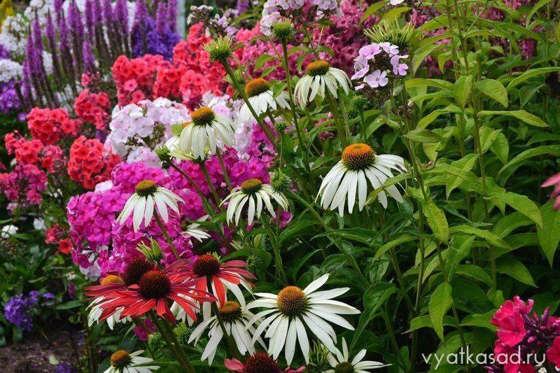 Садовые цветы, похожие на ромашки: как называются и какими бывают