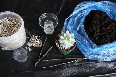 Примеры размножения и посадки суккулента: выбор грунта и варианты своими руками