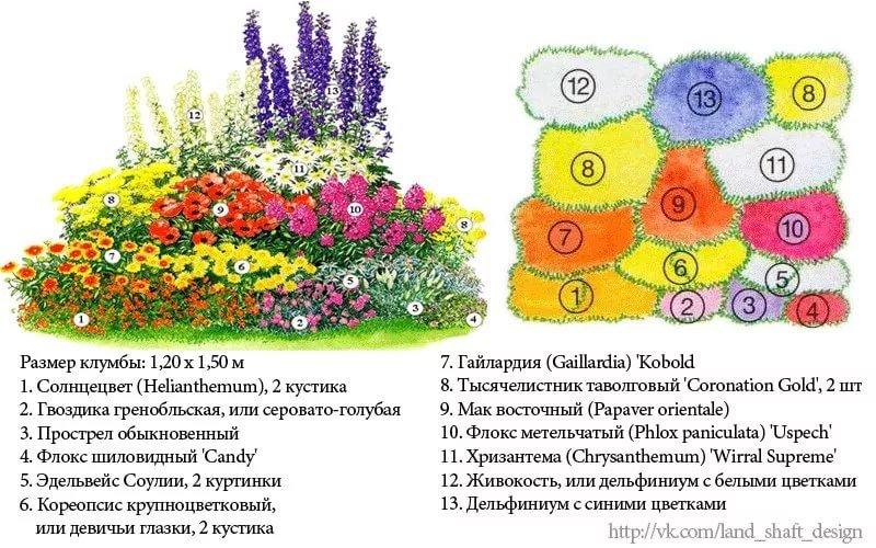 Флоксы в дизайне сада — использование и классификация