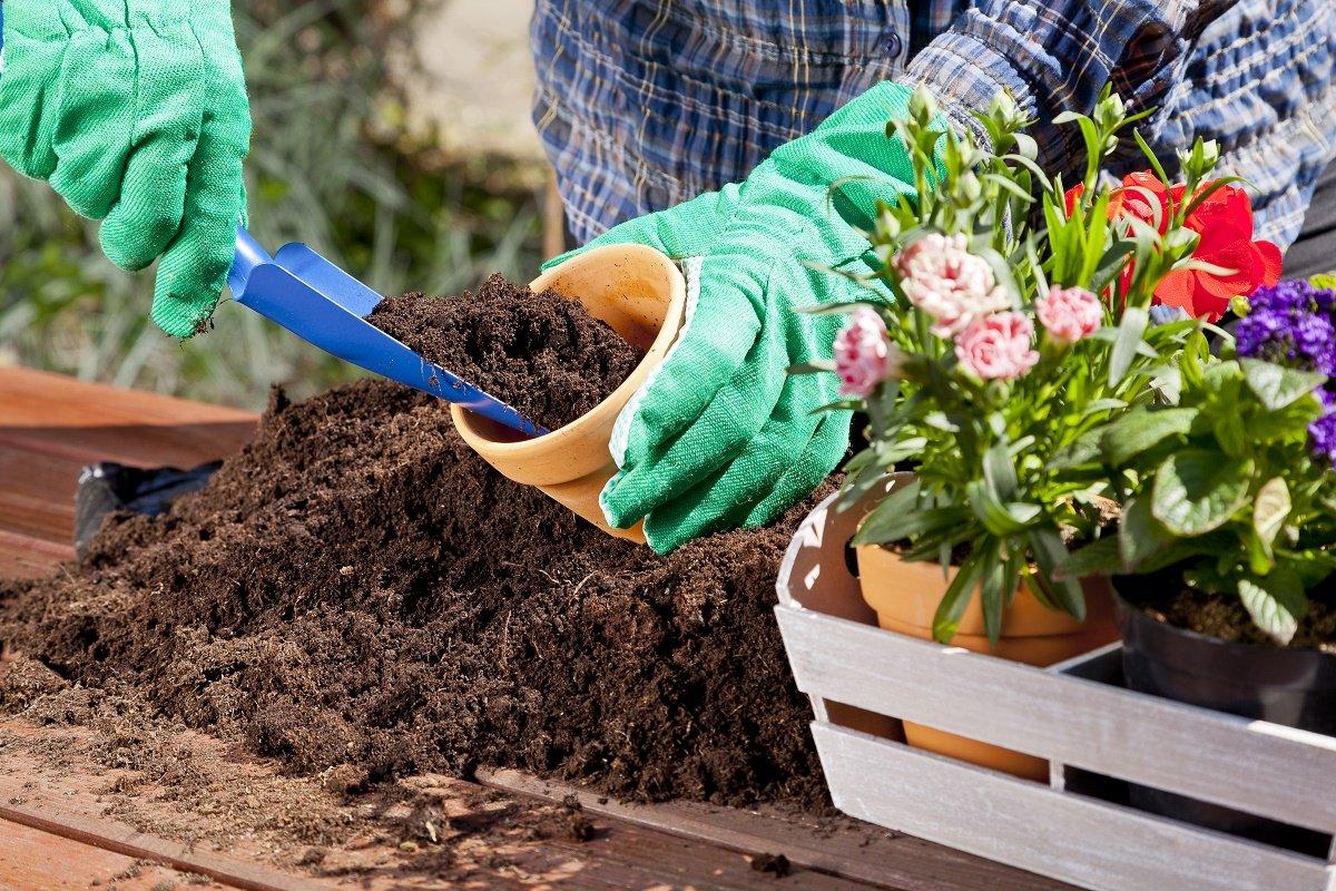 Цветок кроссандра: уход в домашних условиях, фото, выращивание из семян, размножение, пересадка