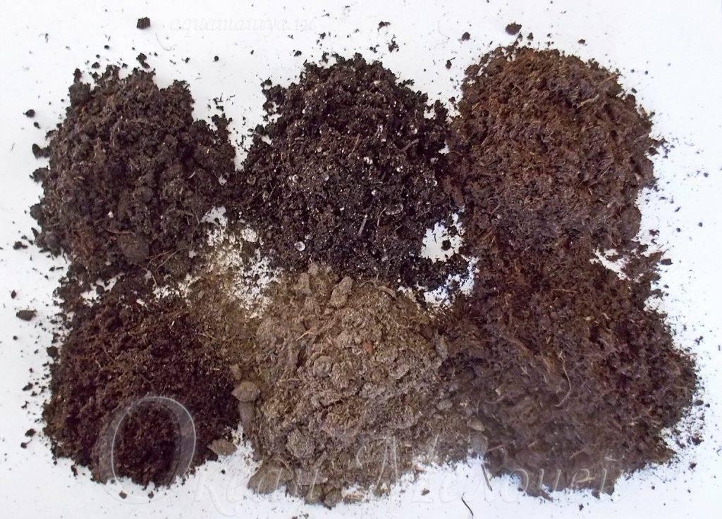 Спатифиллум — пересадка после покупки и при рассадке
