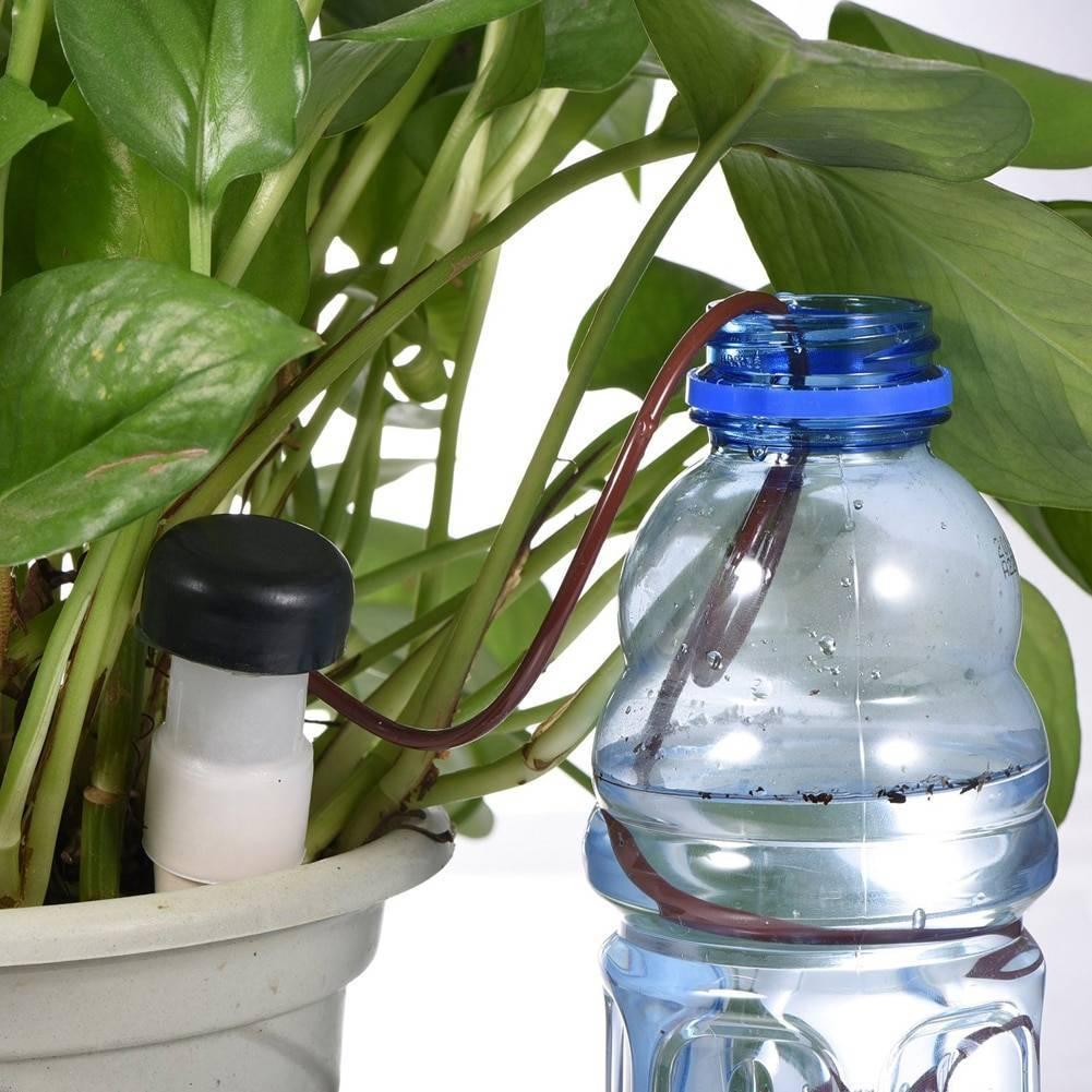 Какой водой поливать комнатные цветы