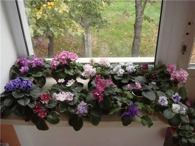 Лучшие комнатные растения для дома, благоприятные для дома и семьи