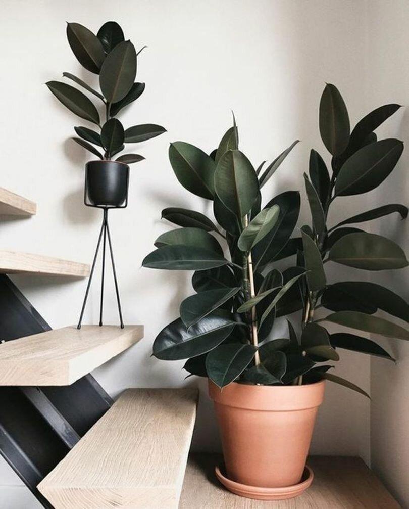Тенелюбивые и неприхотливые комнатные растения в интерьере квартиры. уход и удобрения