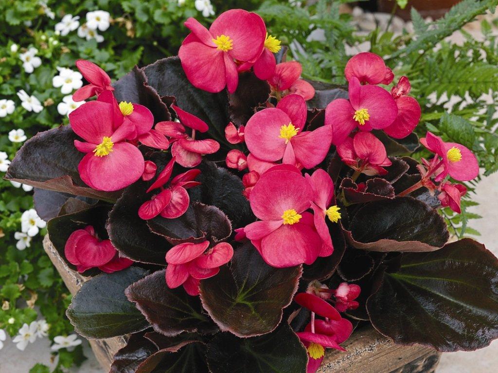 Цветущие комнатные цветы. 17 красиво цветущих комнатных растений, которые преобразят ваш дом!