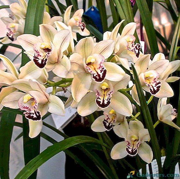 Орхидея уход в домашних условиях: варианты размножения и посадки цветка - pocvetam.ru