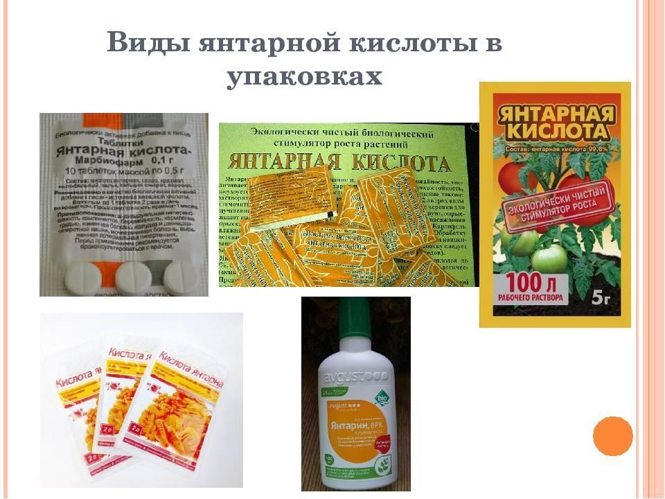Янтарная кислота для орхидей: 2 способа применения