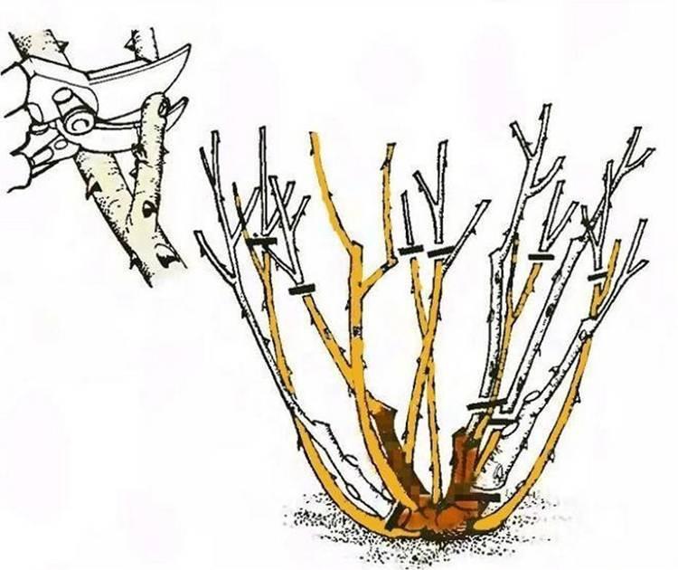 Почему азалия сбрасывает листья? что делать, если все листья опадают зимой и после цветения? причины