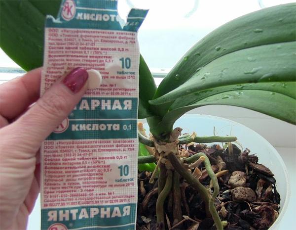 Янтарная кислота для орхидей: примеры развода и применения - pocvetam.ru