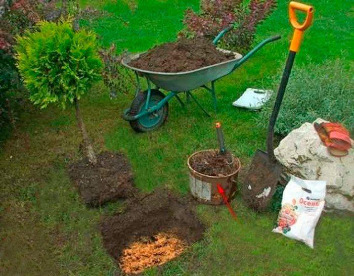 Бедренец-камнеломка — выращивание и уход дома