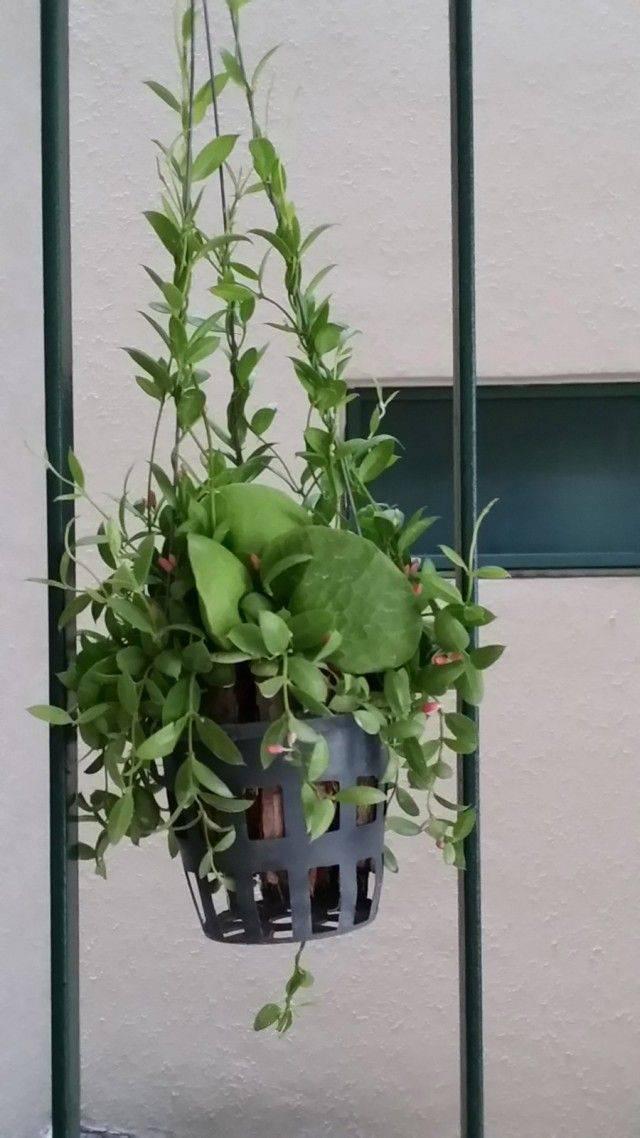 Ампельные цветы для кашпо, свисающие ампельные растения для кашпо на улице