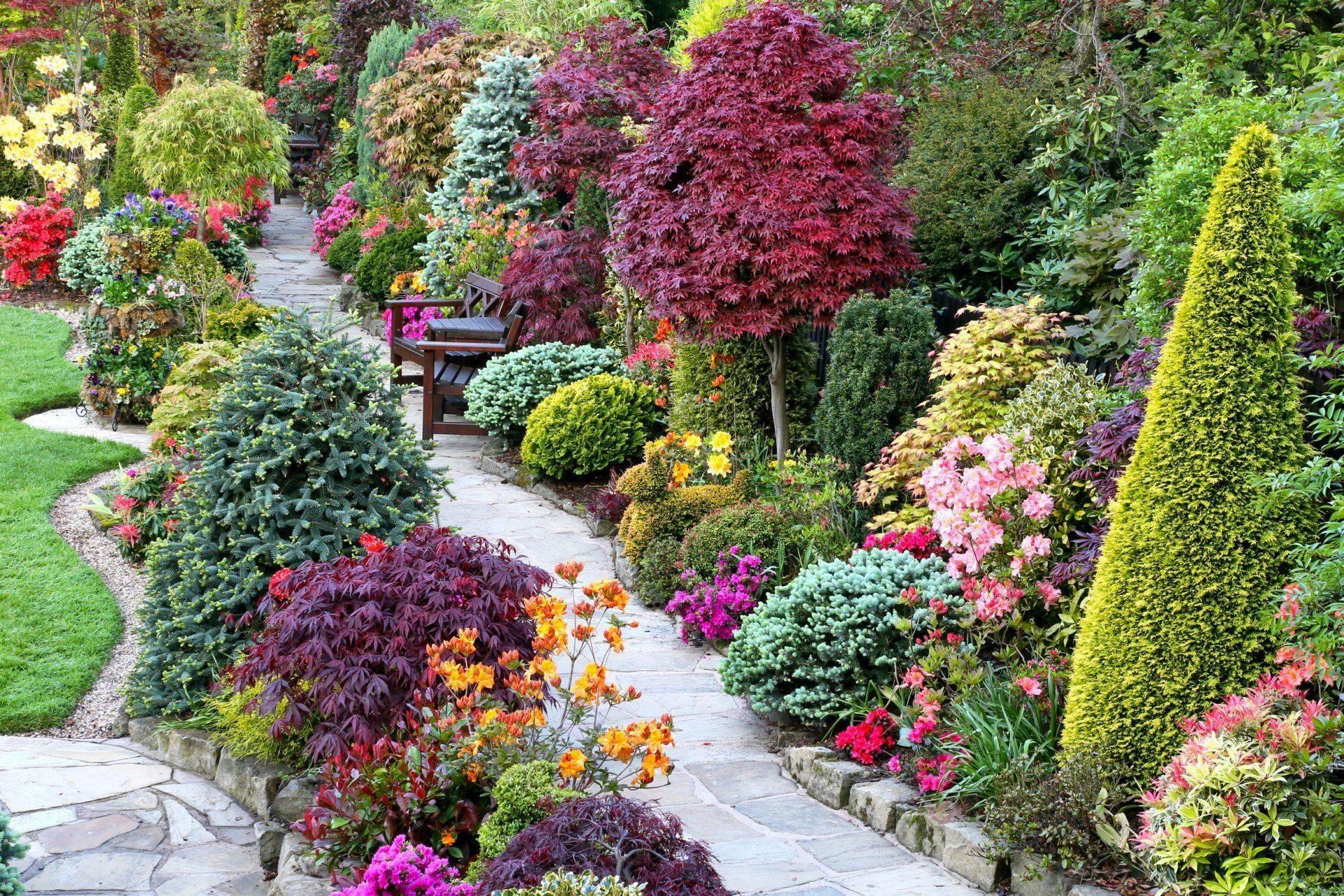 Декоративные кустарники для подмосковья: фото с названиями видов