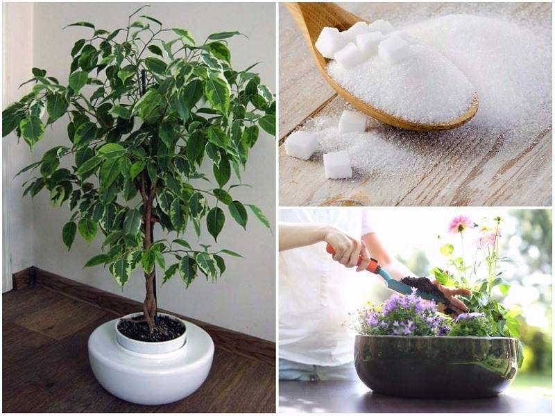 Подкормка комнатных растений в домашних условиях весной и летом